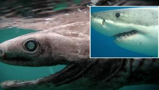 5种令人印象深刻的神奇海洋生物