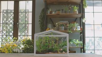 掌上热带雨林,有颜值有创意!教你制作一个绿色植物生态景观