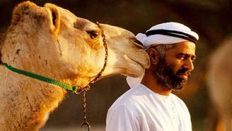 世界上最贵的骆驼:身价达1800万!只有迪拜王储才买的起